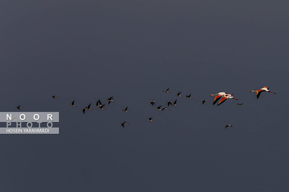 پرندگان%20مهاجر%20در%20دل%20کویر